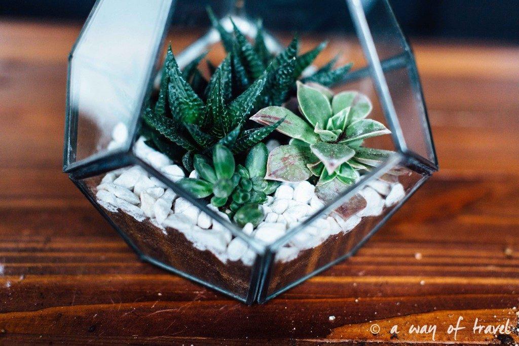 Terrarium de succulente - awayoftravel.fr - Notes de Styles